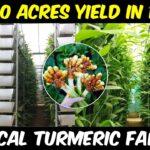 Vertical TURMERIC FARMING | Get 100 Acres yield in 1 Acre Land | Soil based Vertical Farming