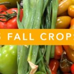 5 Fall Crops for your Florida Vegetable Garden | Growing Food is Easy Challenge