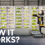 Indoor Farming Is The FUTURE.. But How Does It Work?