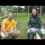 PETITTI Vegetable Gardening in Raised Beds | Part 5: Planting Tomatoes & Peppers