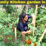 Vegetable garden Makeover for next Harvesting| Kitchen garden in England