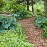 Shade garden design concept