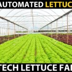 Fully Automated Hydroponic Lettuce Farm | High Tech Lettuce Farming | Amazing Agriculture Technology