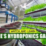 Learn the 6 TYPES OF HYDROPONICS, Introduced by Goldie's Hydroponics Garden