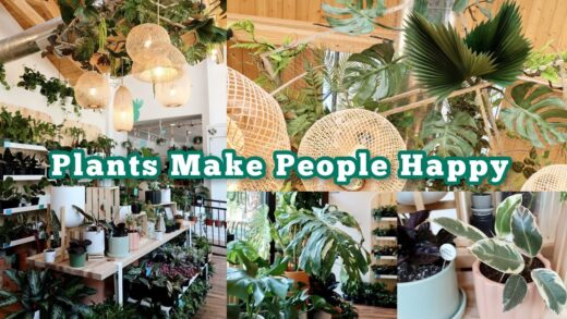 The Sill: Now Open in Chicago! + Primrose Plant Shop Tours | Summer 2021 Plant Shop Crawl pt. 1