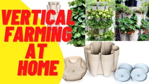 vertical farming   vertical farming at home